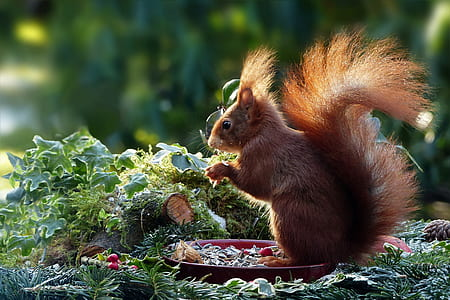 squirrel eating nuts on the plate