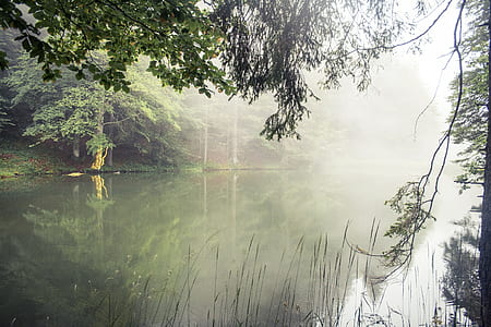 photo of lake in forest during daytime