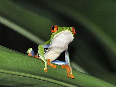 green and white frog on leaf
