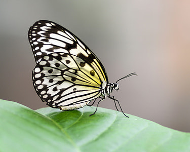 yellow and black butterfly on green leaf