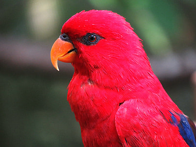 selective focus photography of red bird