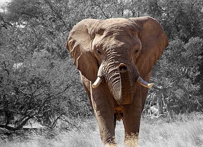 brown elephant beside trees