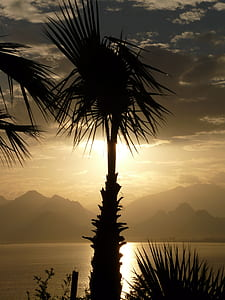 silhouette of palm tree near sea during sunset