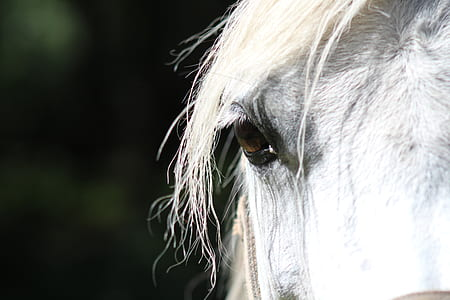 closeup photo of white horse