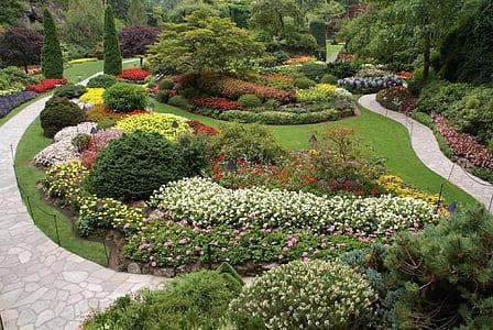 flower garden near trees during daytime
