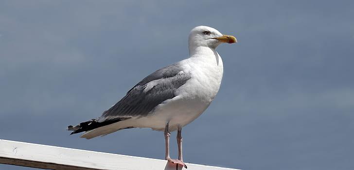 photo of white seagull