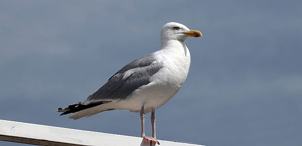 photo of white seagull