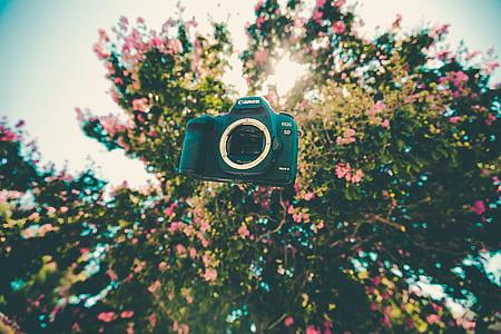 black Canon DLSR camera