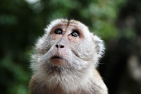 shallow photography of brown monkey