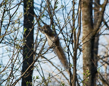 brown and gray squirrel perching on branch