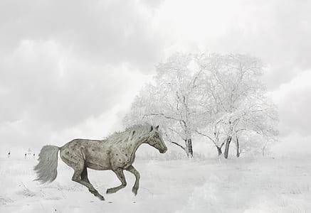 white horse against white tree