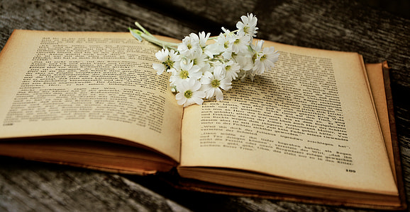 white daisy, flowers, book, old book, read, used