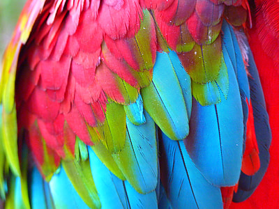 close-up photography of pink, blue, and green bird feathers