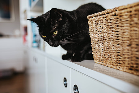 Black cat by a wicker basket on a white bookcase shelf