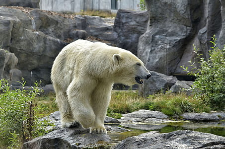 polar bear on gray rock