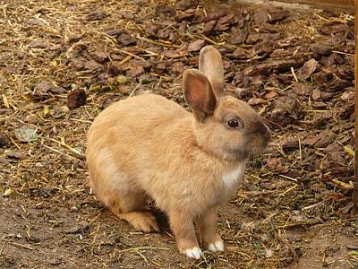 brown rabbit on dirt soil