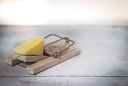 cheese and brown mousetrap
