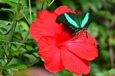 green and white butterfly on red flower