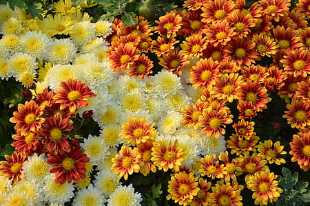 yellow and red flowers photography