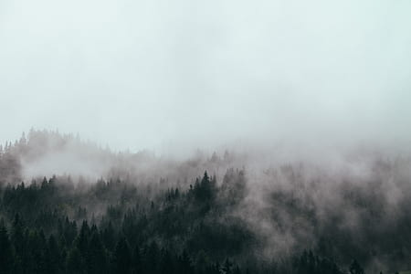 aerial photography of fog covered forest