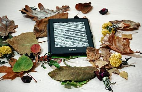 black Kindle e-book reader beside of assorted leaf lot