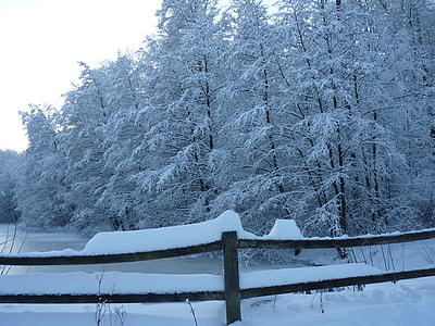 brown wooden fence near pine trees with snow