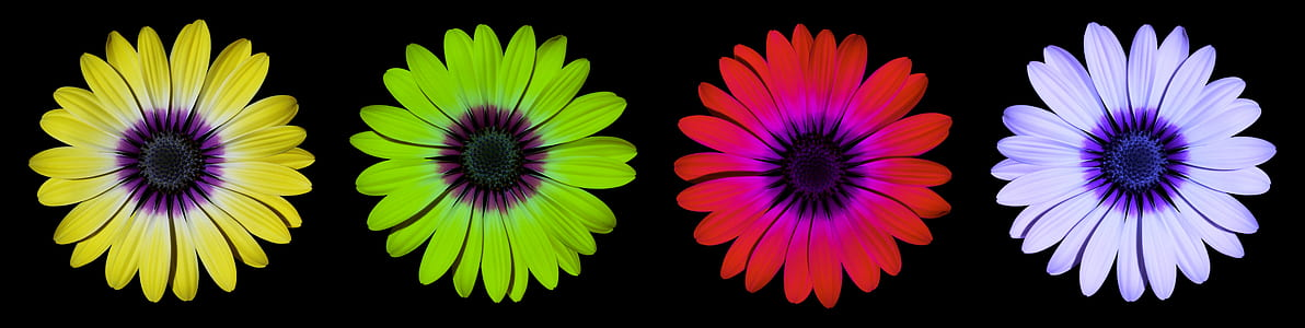 yellow, green, red, and purple flowers