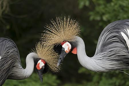 two gray birds near greenbush