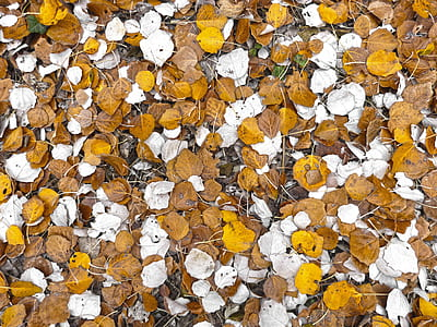 white and brown falling leaves