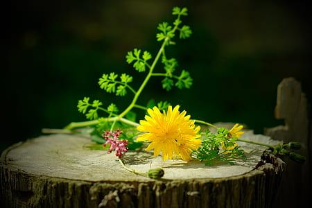 yellow daisy flower on tree log