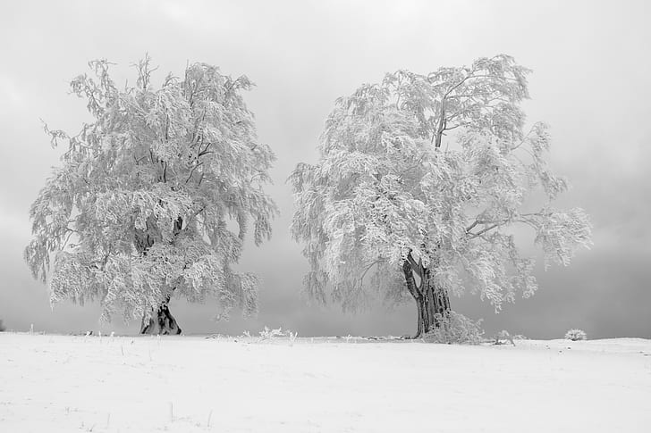 two tree covered with snow high-saturated photography
