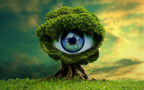 green tree with eye