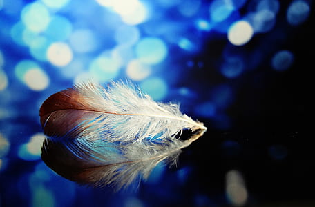 brown and white feather photography