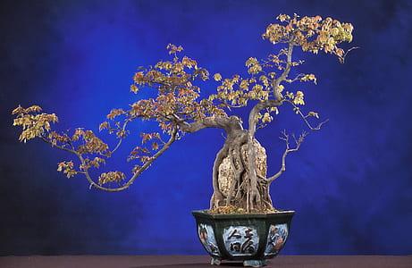 beige bonsai plant