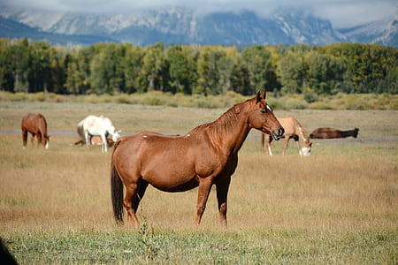 brown horse on grass field during daytime