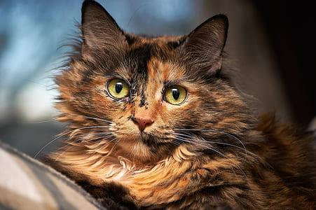 closeup photography of short-fur brown cat
