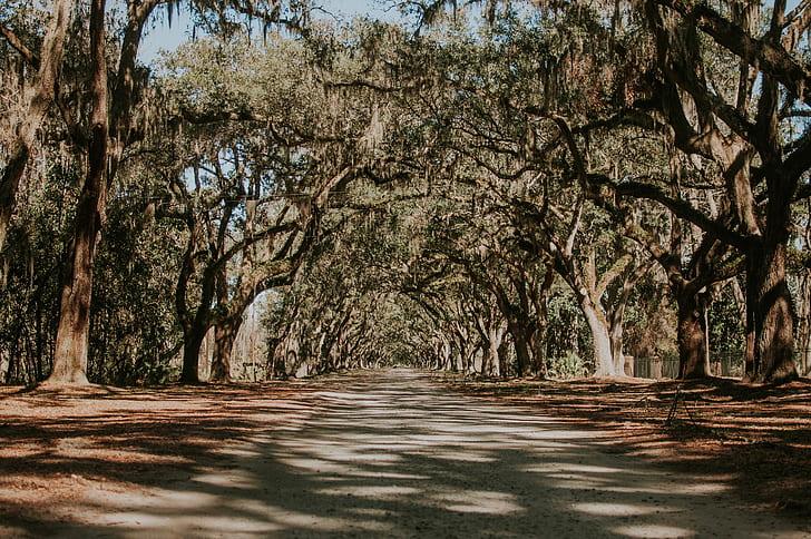 pathway between green leaf trees