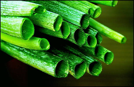macro photography of green leafed tube