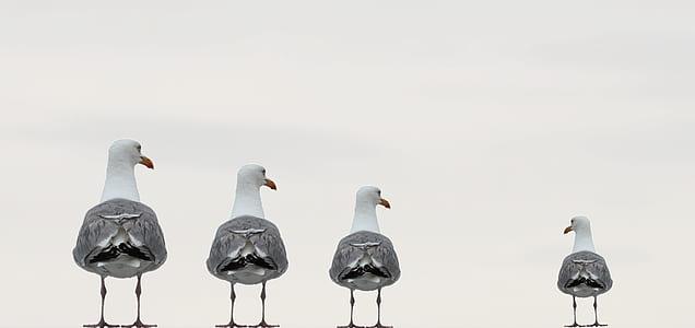 four grey birds