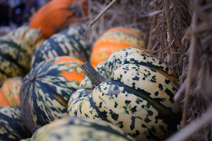 close up photography of bunch of pumpkin