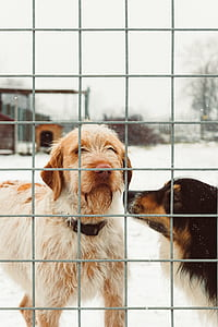 two black and tan dog behind cage