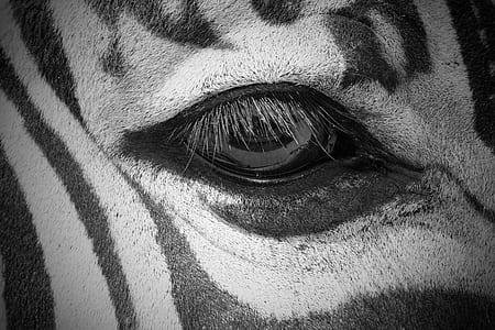 grayscale photo of eye
