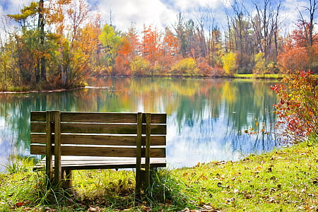 brown wooden bench on the grass field facing on body of water