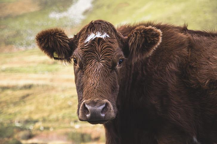 closeup photo of brown cow