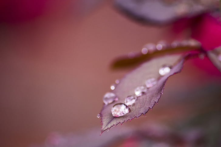 selective focus photo of water dew on leaf