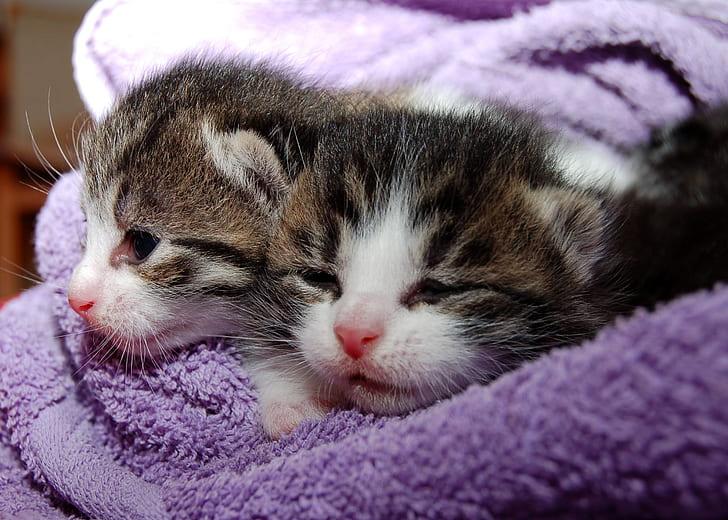 two brown tabby kittens