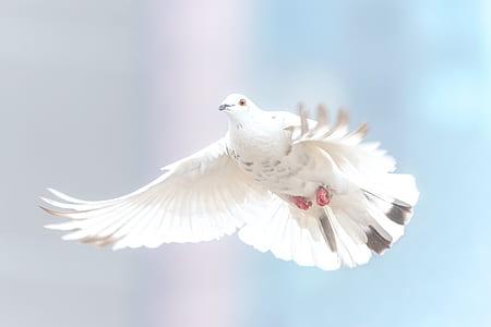 white and gray dove