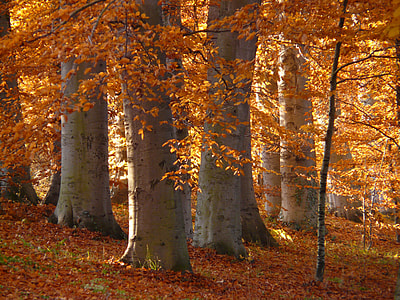 photo of trees with brown leaves