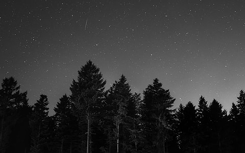 landscape photography of pine trees during night time