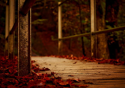 red tree leaves on brown wooden bridge